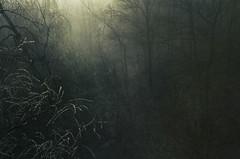 Into the Deep (Kim Yokota) Tags: trees mist toronto canada nature fog scenery darkness branches ravine enchantedforest cedarvalepark glencedarbridge nikond7000 thebeltlinetrai