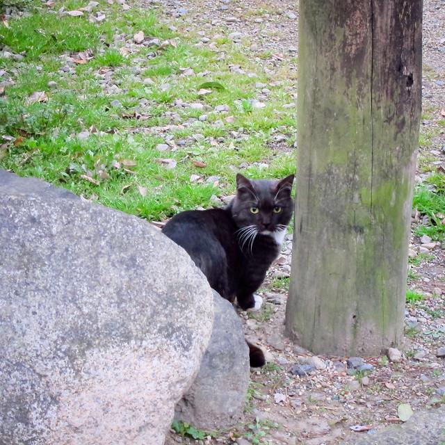 Today's Cat@2012-03-30