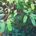 6215075757_fc9801d60d_s