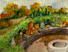 Marie's Harvest (Marcia Milner-Brage) Tags: autumn ink garden watercolor pumpkins harvest marigolds brushpen urbanlandscape squashes