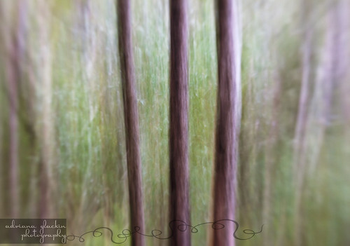 spring abstract_9