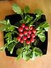 IMG_0587 (Haicopek Ng) Tags: vegetable ixus55 haicopek