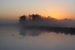 Sunrise in Holland (Pepijn Hof) Tags: morning light holland reflection bird nature water dutch field fog sunrise canon landscape wildlife horizon nederland natuur explore fields tamron frontpage vogel ochtend zuidholland hekendorp haastrecht southholland explored frontpageexplore 40d hoenkoop