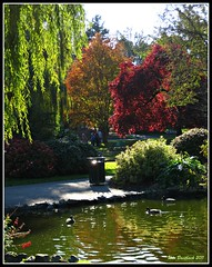 Beacon Hill (CanMan90) Tags: park flowers autumn trees light people reflection water duck pond october downtown colours bc hill ducks victoria vancouverisland beacon 2011