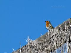 Buenos das :) (Sus Blanco) Tags: morning sky bird nature pjaro