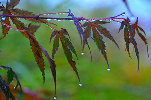 10-26-10 Wet Weather by roswellsgirl