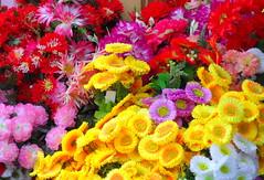 plastic flowers in the rain (dmixo6) Tags: colour rain spain dugg dmixo6