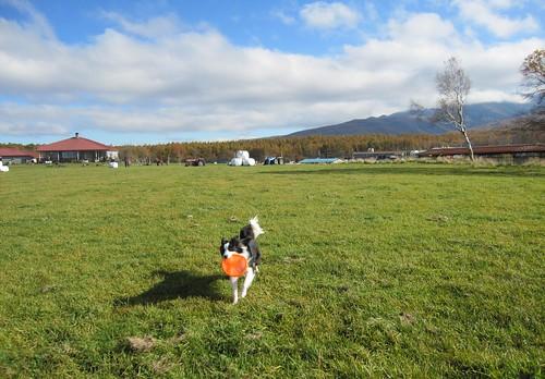 フリスビーを持ってくるランディ 2011年10月26日14:26 by Poran111
