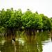 Mangroves-18