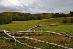 l'arbre mort (TeF46) Tags: france automne nikon mort lot arbre fort 46 midipyrenees d90 segala pixelistes nikonfrance nikonistes departementdulot frederiquetezier