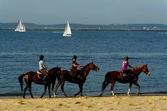 Trois chevaux, trois bateaux  voile (Edgard.V) Tags: horse france praia beach port automne buch de la sand barco areia sable vela teste plage cavallo cavalo spiaggia arcachon sabbia bassin pyla veleiro aquitaine gironde