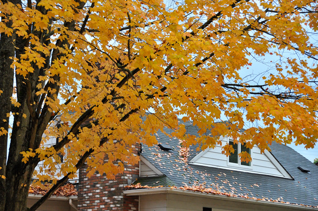 yellow-tree-outside-house