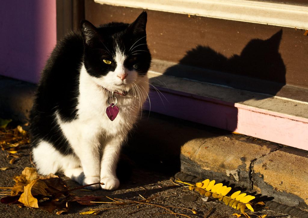 365-146 Cupcake Cat