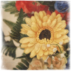 Still life with yellow gerbera (in eva vae) Tags: stilllife macro art texture yellow closeup canon square soft inevavae flickrstruereflection1