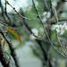 庭園の冬桜