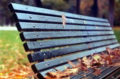 (laEmi) Tags: film rain foglie analog zoe milano colori pioggia panchina aforisma