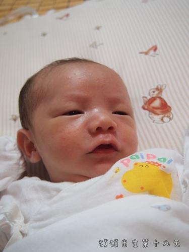 出生第十九天2