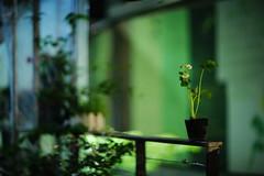 2008/1920*^:z (june1777) Tags: street light night canon eos dof bokeh 85mm snap 1600 clear e seoul 5d ef insadong f12 ssamziegil