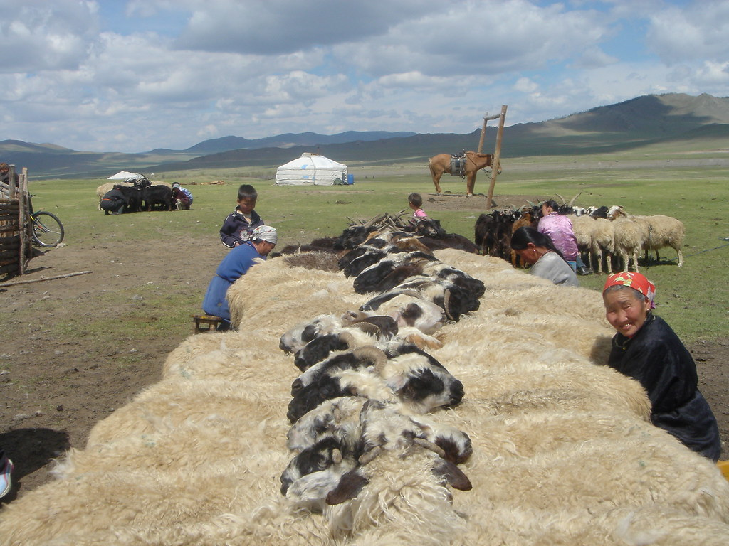 Traite des brebis, Sum de Onder-Ulaan (Bag de Belkhi), Arkhangaï, Mongolie