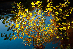 Autumn tree (Theophilos) Tags: blue autumn tree nature leaves yellow greece dreama