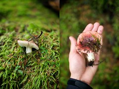 Rosy Russula I Believe (Mar