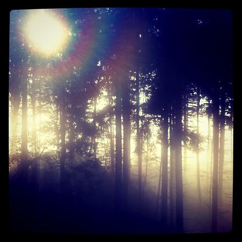 am ende des nebels. #latergram