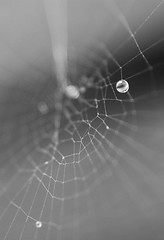Fragile (Andrew Speight // speightphoto.com) Tags: summer blackandwhite white black macro beach water rain shower spider droplets nikon web spiderweb h2o d60 asphoto andrewspeight andrewspeight|photo andrewspeightphotography