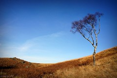 (andrewlee1967) Tags: uk england tree britain sony gb moors saddleworth andrewlee andrewlee1967 nex3