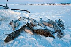 Expedition (Egor Fedorov) Tags: winter mammoth yuka aia yakutia egorfedorov fdrv