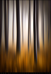 Forest Essence - Vertical Panning Abstract Photography (Dave Allen Photography) Tags: lighting longexposure autumn trees light orange abstract motion blur mountains fall nature grass vertical forest landscape outdoors photography golden photo moving nc blurry woods nikon exposure seasons natural artistic fineart dream deep northcarolina blurred foliage motionblur fantasy carolina dreamy tall pan trunks panning technique blueridgeparkway blueridge dreamscape daveallen appalachians wnc westernnorthcarolina southernappalachians d700 verticalpanning mygearandme mygearandmepremium mygearandmebronze mygearandmesilver mygearandmegold mygearandmeplatinum mygearandmediamond