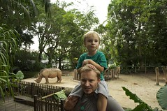 Singapore Zoo (Rhinos) (AroundtheWorldwithKid) Tags: travel zoo singapore asia southeastasia raw australia rhinos queensland rtw noosaheads oceania familytravel travelwithkids travelwithchildren travelwithkid australiaeasterncoast
