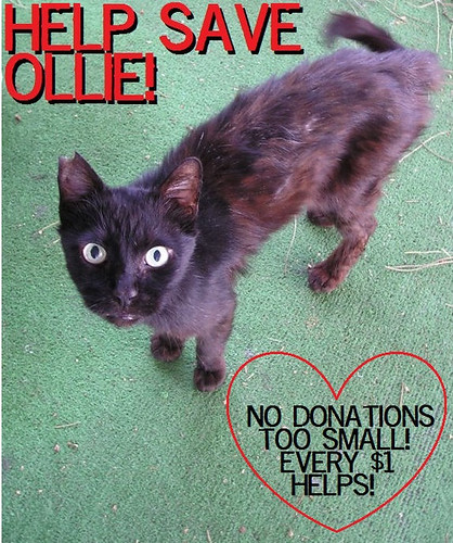 Can You Help Ollie?