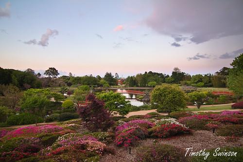 Toowoomba Japanese Gardens-9