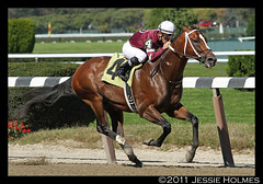 Tapizar in a winning return to the track (Spruceton Spook) Tags: horseracing belmontpark coreynakatani tapizar