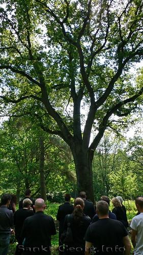 Waldfriedhof in Hamburg Ohlsdorf