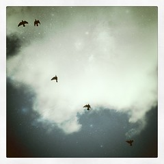 IMG_8225 (Shaian) Tags: travel blue sky urban cloud bird vintage denmark freedom fly wings wind pigeon feather citylife retro iphone cellphonephotography copenahegn