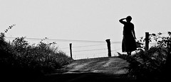 (Jonathan Bayol) Tags: blackwhite noiretblanc route aveyron barbele