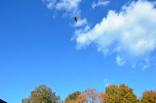 october 2011 250