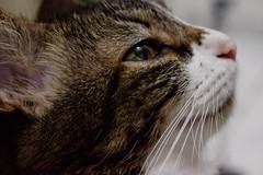 Just Monica (Michele Bernardes) Tags: cute beautiful cat kitten kitty lindo monica gato linda gata felino fofo gatinho felina sadeyes gatinha bichano olhostristes bichana