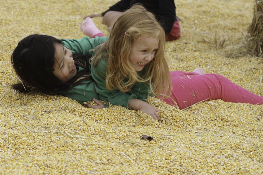 corn pit anna catching