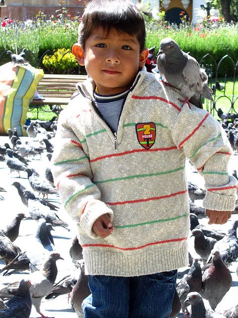Pigeon on a boy in Plaza Murillo, La Paz, Bolivia