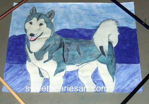 My Completed Husky Drawing