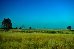 Blazing Plains. By R J Watson (Ray~Watson) Tags: uk blue autumn trees sky brown sun green fall nature sunshine landscape nikon october seasons view natural minimal plains staffordshire autumnal cannockchase 2011 d7000