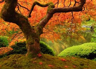 Portland Japanese Garden iconic tree