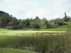 Turtle Bay Colf Course 306