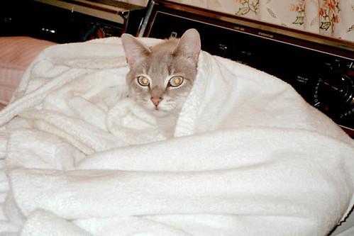 kitties_38571_11