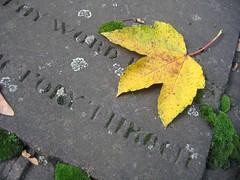Old Cemetery Bonn (S-UE 63 H) Tags: autumn friedhof fall grave graveyard yellow leaf maple bonn tombstone mapleleaf gravestone churchyard blatt grabstein alterfriedhof ahorn oldcemetery