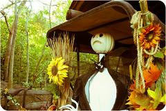 Jack Skellington's Younger Years (hbmike2000) Tags: fall halloween leaves vintage pumpkin nikon carriage disneyland disney retro resort sunflower jackskellington d200 hdr frontierland hss explored bigthunderranch sundaysliders hbmike2000