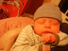 Leo sleeping through pumpkin carving