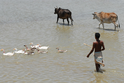 A fisherman and his livestock, Bangladesh. Photo by WorldFish, 2007